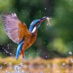 5 Best Budget Lenses For Bird Photography (Reviewed)
